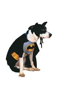 Picture of BATMAN