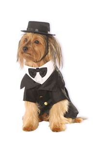 Picture of DAPPER DOG